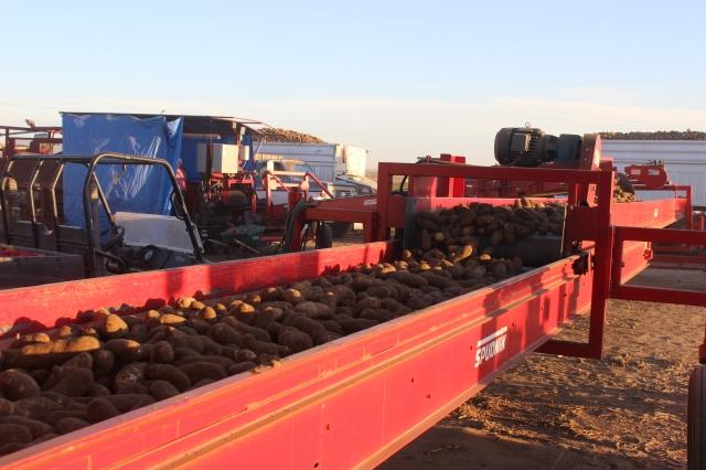 2015-9-22 Baker Potato harvest (11)