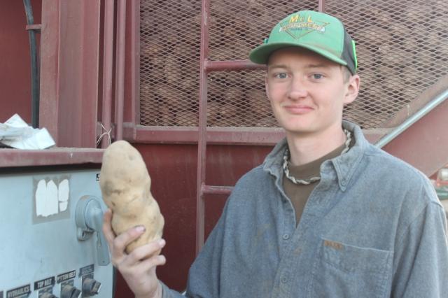 2015-9-22 Baker Potato harvest (32)