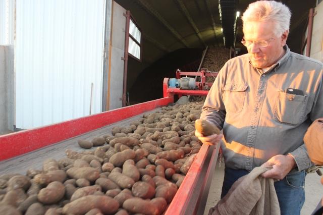 2015-9-22 Baker Potato harvest (37)