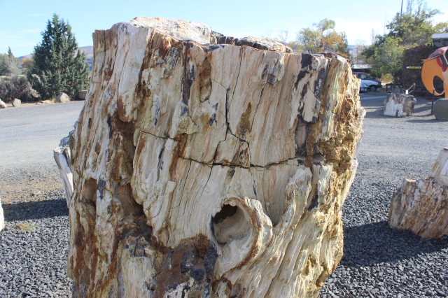 2015-10-6 Ginko Petrified Forrest (3)