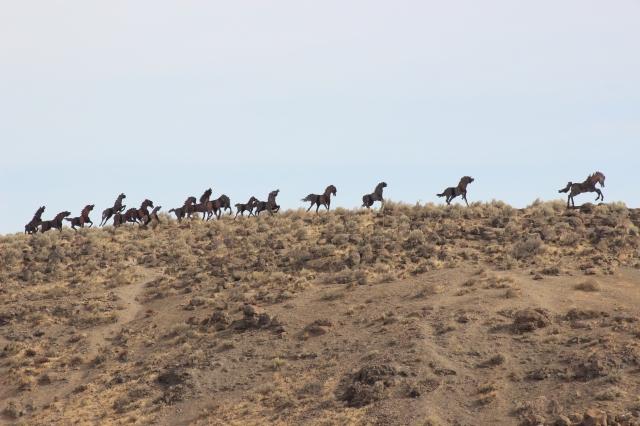2015-10-6 Wild Horse Canyon (4)