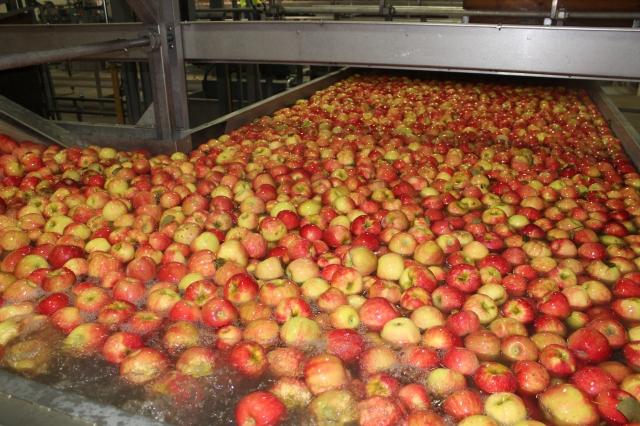 2015-10-7 Apples (39)