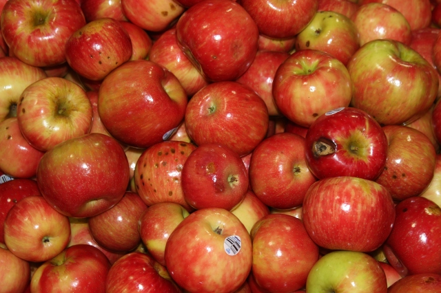 2015-10-7 Apples (42)