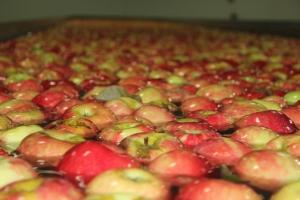 2015-10-7 Apples (44)