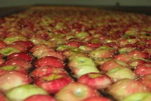 2015-10-7 Apples (45)