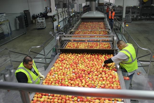 2015-10-7 Apples (46)