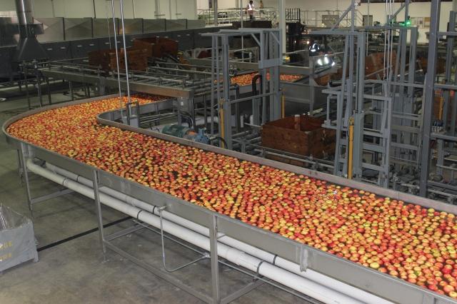 2015-10-7 Apples (47)