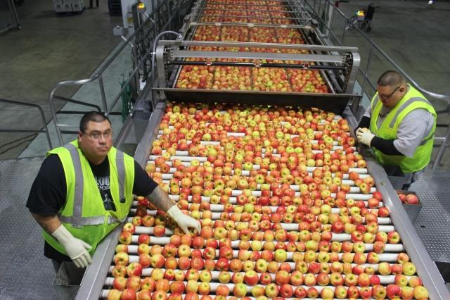 2015-10-7 Apples (48)