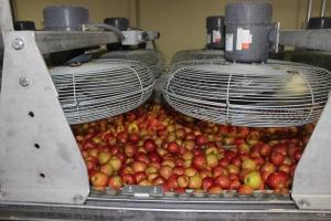 2015-10-7 Apples (50)