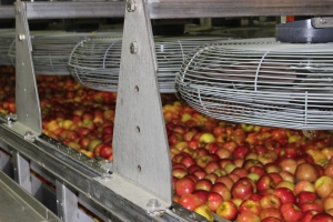 2015-10-7 Apples (53)