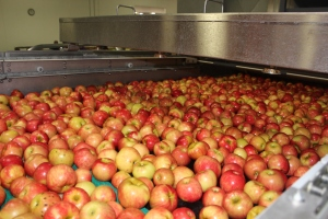 2015-10-7 Apples (54)