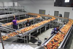 2015-10-7 Apples (56)