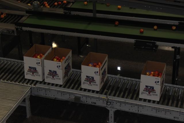 2015-10-7 Apples (69)