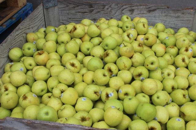 2015-10-7 Apples (74)