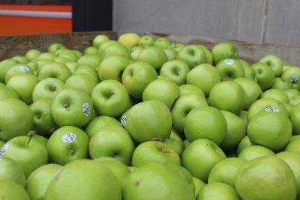 2015-10-7 Apples (75)