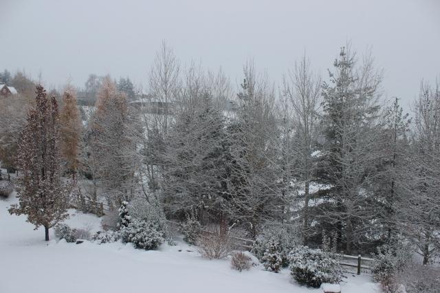 2015-11-24 SNOW (2)