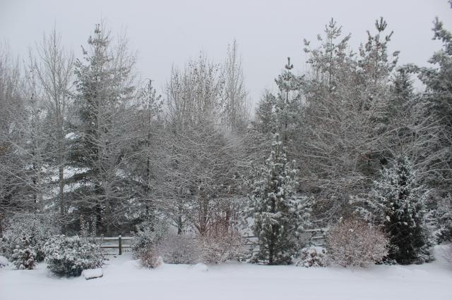 2015-11-24 SNOW (3)