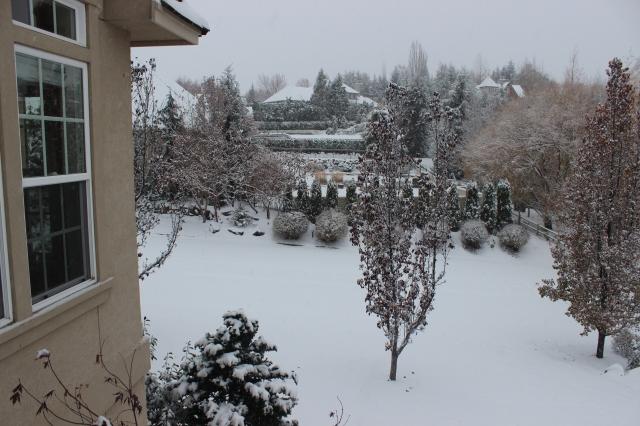 2015-11-24 SNOW (4)