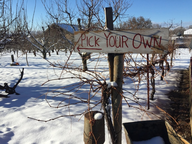 2015-12-19 Johnson's Fruitstand (1)