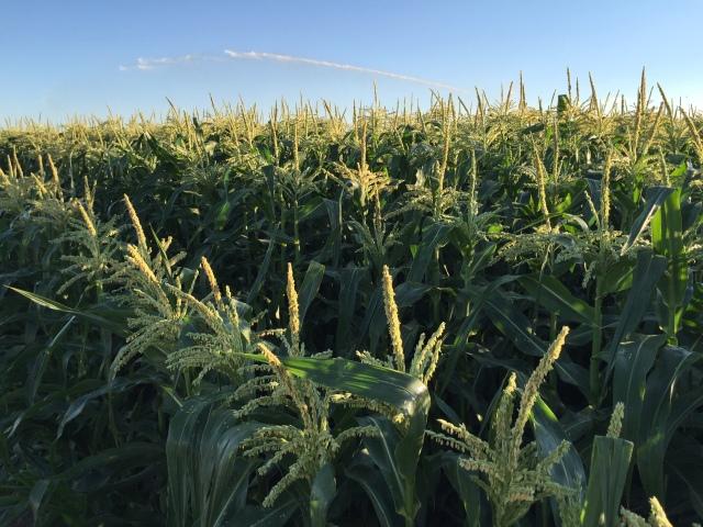 2016-7-28 Crops (17)