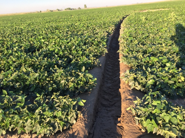 2016-7-28 Crops (26)
