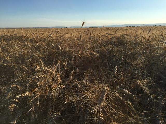 2016-7-28 Crops (3)