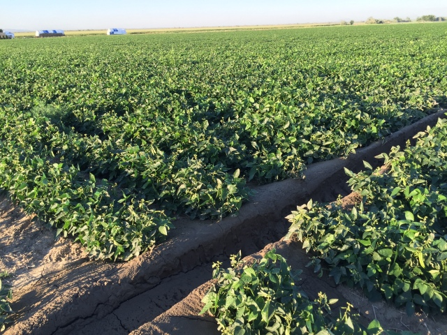 2016-7-28 Crops (31)