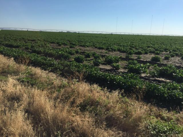 2016-7-28 Crops (39)