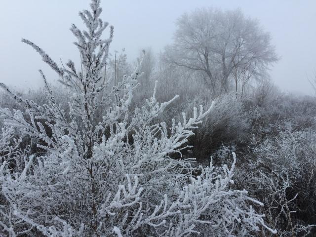 2016-12-24-white-christmas-6