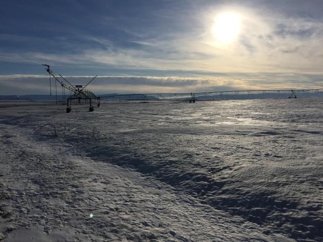 2017-2-2-royal-in-snow-16