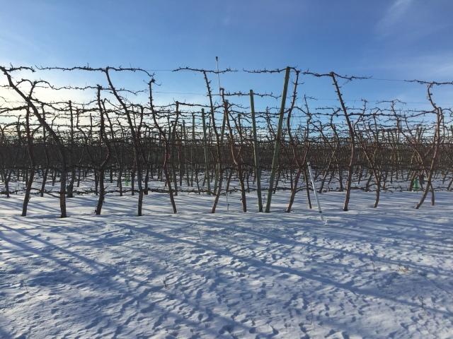 2017-2-2-royal-in-snow-30