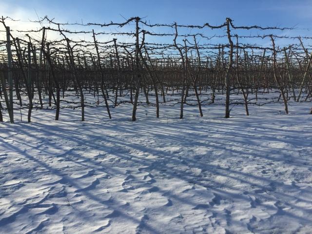 2017-2-2-royal-in-snow-32