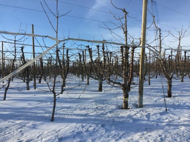 2017-2-2-royal-in-snow-35