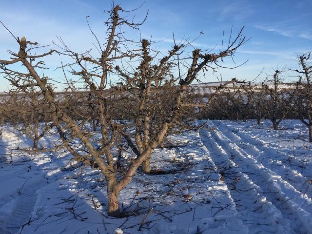 2017-2-2-royal-in-snow-44
