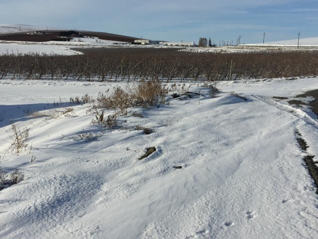 2017-2-2-royal-in-snow-8