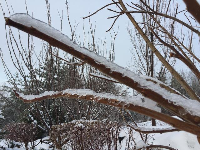 2017-2-9-icy-rain-19