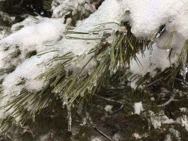 2017-2-9-icy-rain-5