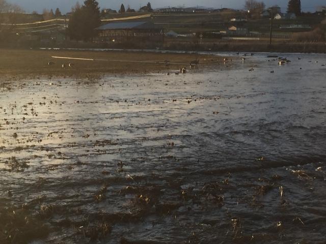 2017-3-11 zYakima flooding (14)