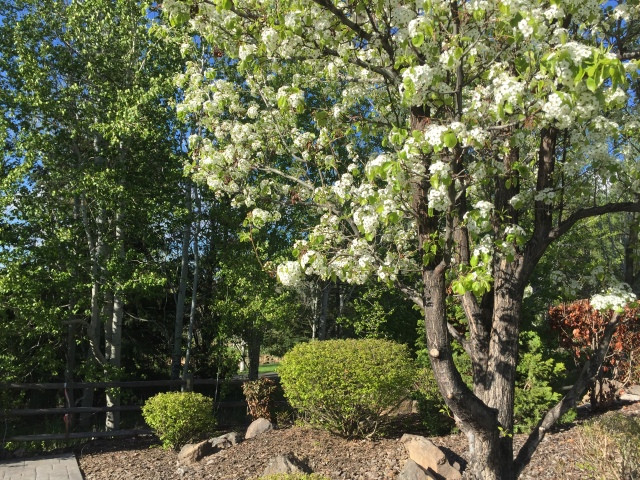 2017-4-26 zMission Home in Spring (15)