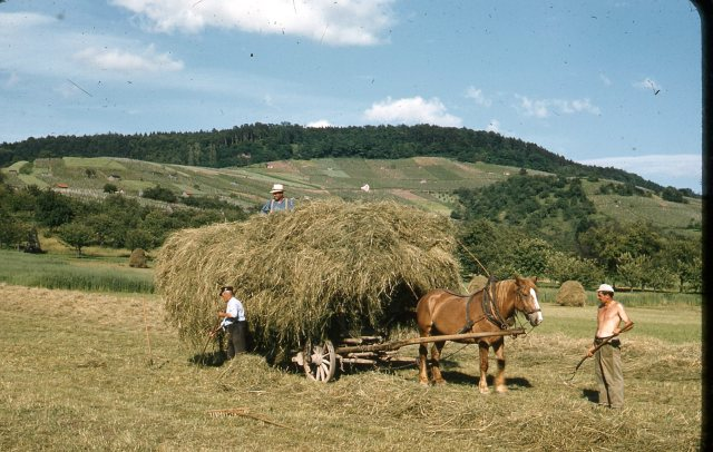 0 Germany farming 1956
