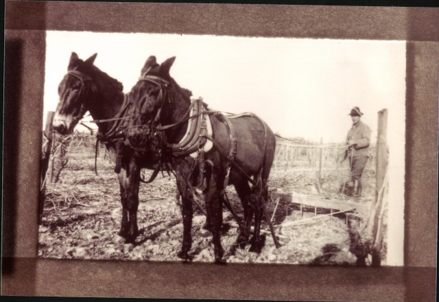 1 Rudolf Laemmlen plowing