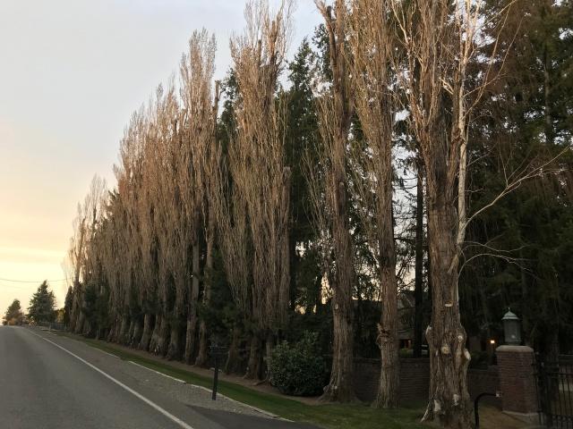 2018-3-30 Scenic Drive Walk (3)
