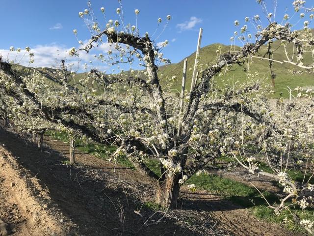 2018-4-22 z Roadtrip in the Springtime (19)