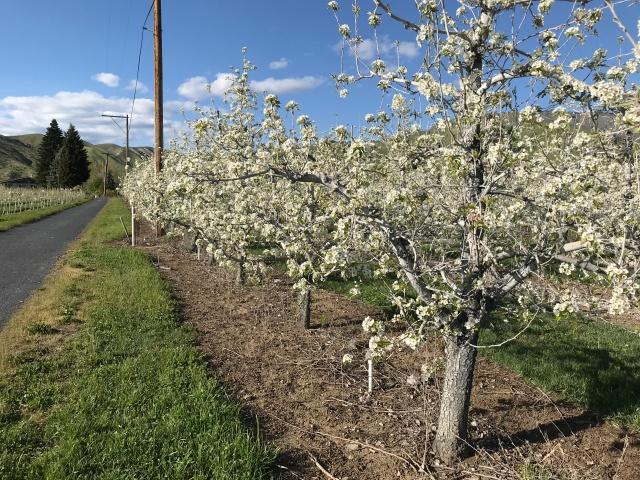 2018-4-22 z Roadtrip in the Springtime (5)