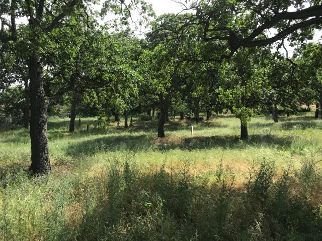 2018-5-20 Dalles z Pioneer Cemetery (10)