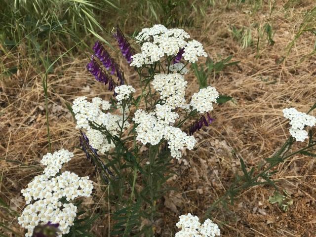 2018-5-20 Dalles z Pioneer Cemetery (39)